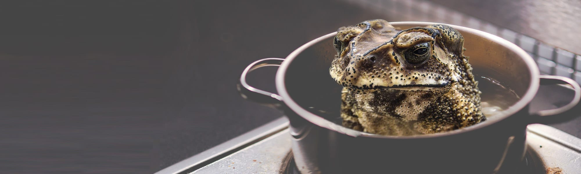 frog in pot recruitment banner